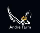 ANDRE FARM OÜ